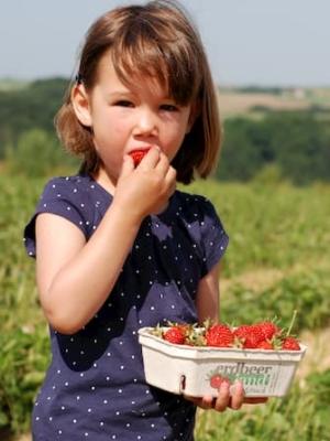 Kind isst Erdbeere auf einem Selbstpflückfeld von Erdbeerland Ernst & Funck