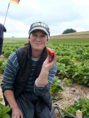 Mitarbeiterin hält Erdbeere in der Hand auf einem Feld Erdbeerfeld von Erdbeerland Ernst & Funck