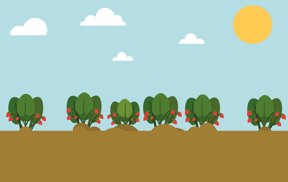 Comic Bild Erdbeersetzlinge wachsen auf Erdbeerfeld von Erdbeerland Ernst & Funck