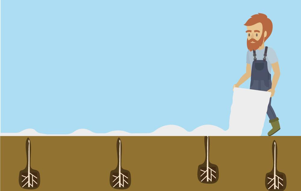 Comic Bild Bauer deckt Spargel auf dem Feld von Erdbeerland Ernst & Funck mit weißer Folie Plane ab