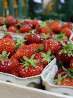 Frische Erdbeeren in Schälchen