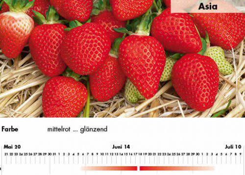 Erdbeersorte Asia im Saarland