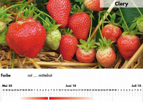 Erdbeersorte Clery im Saarland