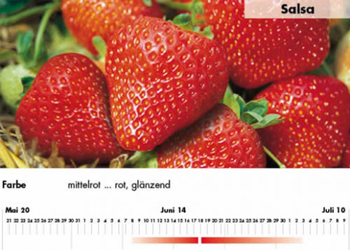 Erdbeersorte Salsa im Saarland